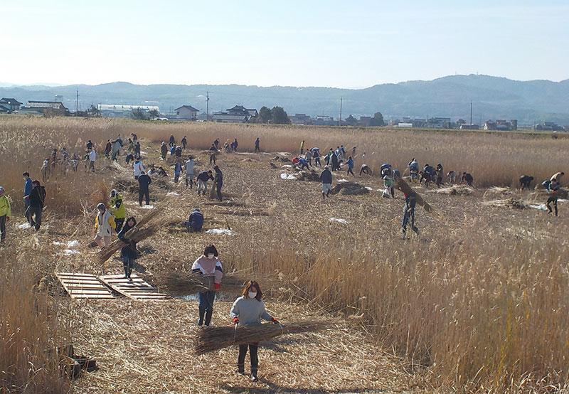 宍道湖のヨシ刈りに参加