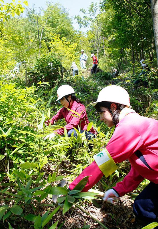 石見銀山での森林保全活動の様子